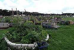 Kleingartenanlage Tempelhofer Feld
